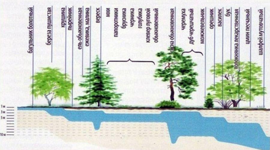Таблица с определением уровня грунтовых вод по растениям и деревьям
